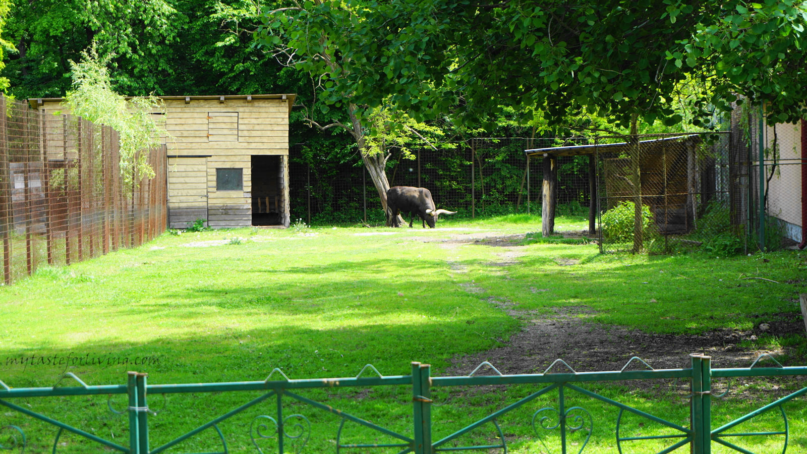 "The zoo in Pitesti, Romania, is located in the natural Forest Park ""Trivale"" and it was definitely a pleasant destination to visit."
